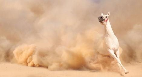 BE horse dust storm 2 DP