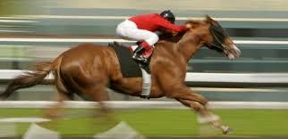 BE racehorse DP