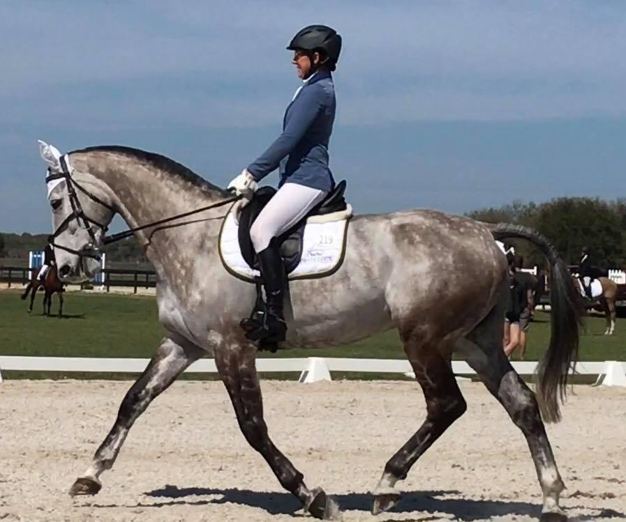 BE Zebrasaurus Dressage Rocking Horse